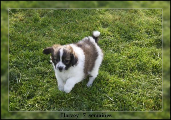 harvey-a-7-sems-2.jpg