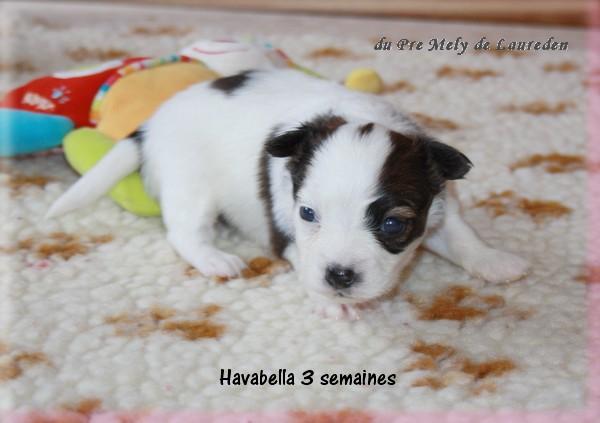 havabella-3-sems-1.jpg