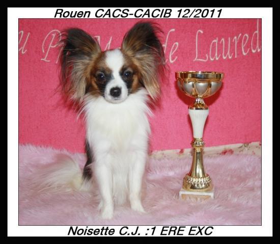 hazelnut-a-rouen-cacs-cacib-1.jpg