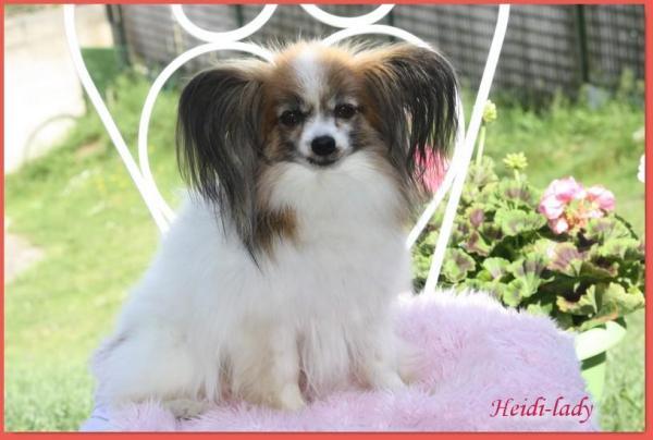 Heidi 8 ans 5