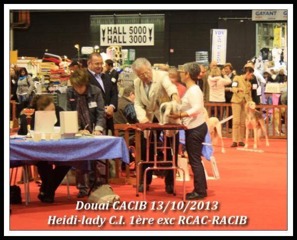 heidi-lady-douai-cacib-10-2013-2.jpg