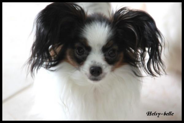 Helsy belle 1 ans 3