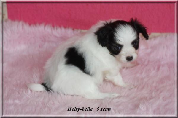 helsy-belle-5-sems-1.jpg