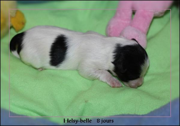 helsy-belle-8-js-4.jpg