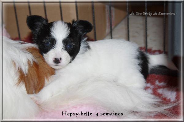 hepsy-belle-4-sems-3.jpg