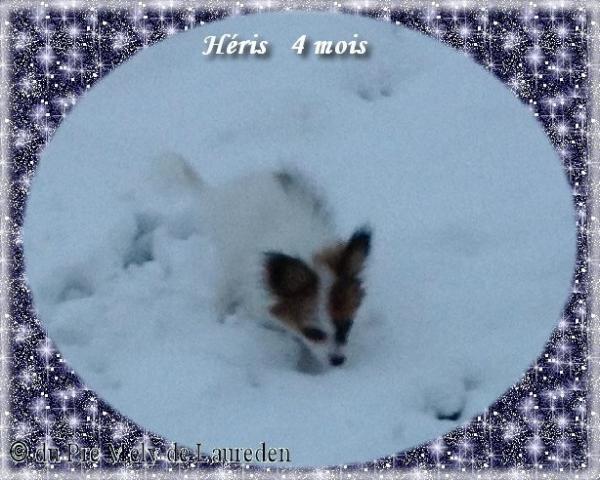 heris-4-1.jpg