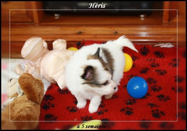 heris-a-5-sems-2.jpg