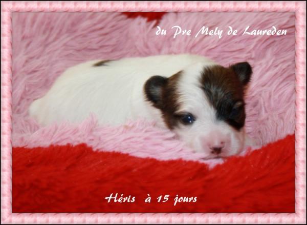 heris-a15-jours-3.jpg