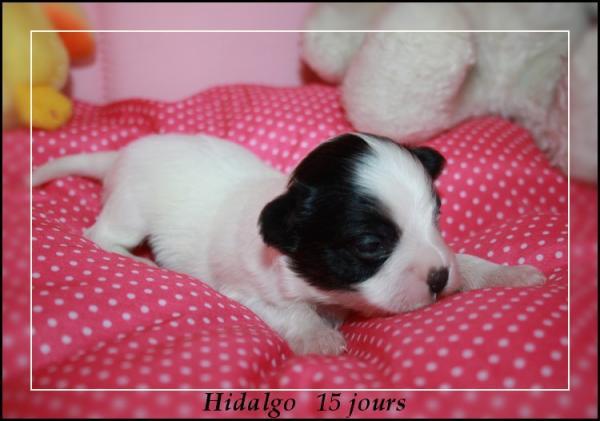 hidalgo-15-jours-1.jpg