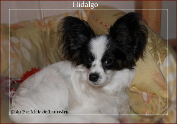 hidalgo-8-mois-1.jpg