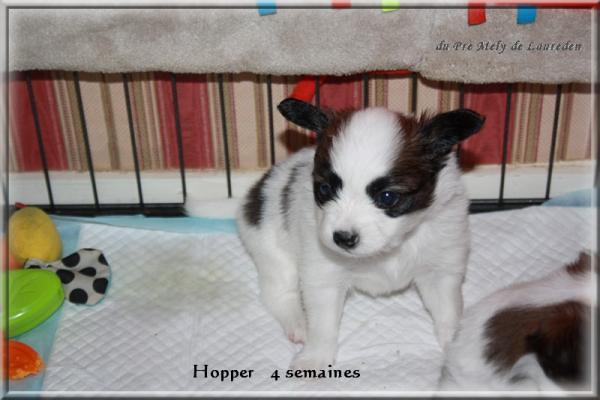 hopper-4-sems-1.jpg