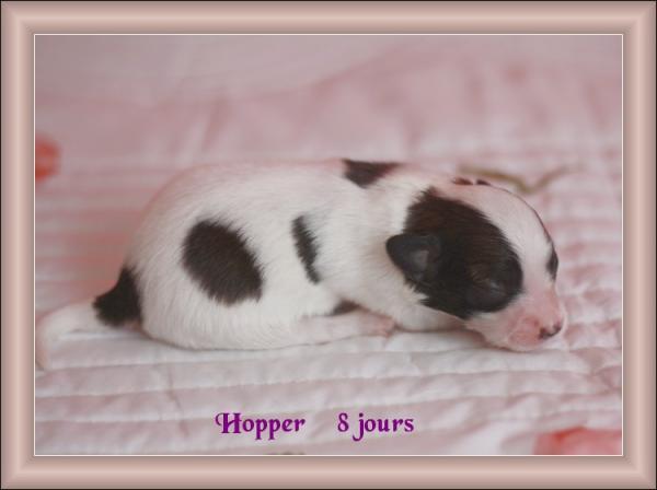 hopper-8-jours-1.jpg