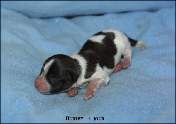 hurley-1-jour-1.jpg