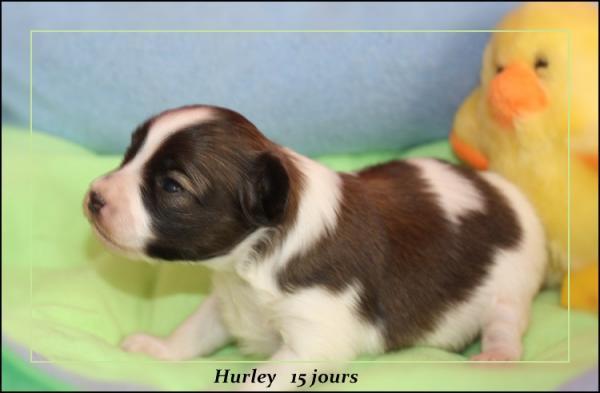 hurley-15-jours-2.jpg