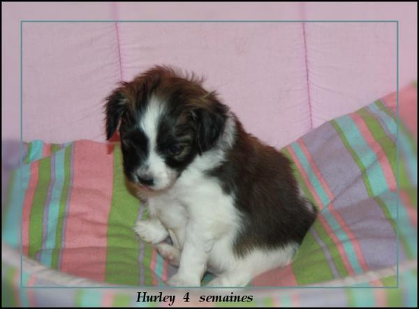 hurley-4-sems-1.jpg