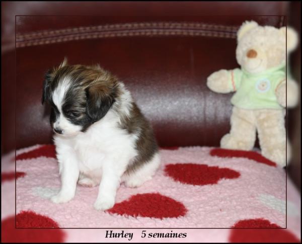 hurley-5-sems-1.jpg