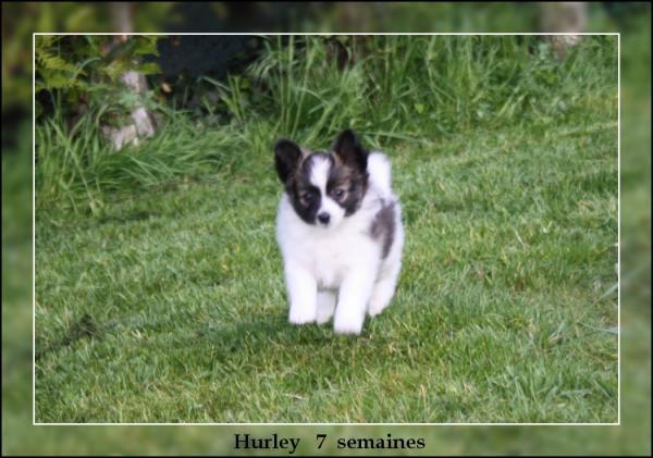 hurley-a-7-sems-4.jpg