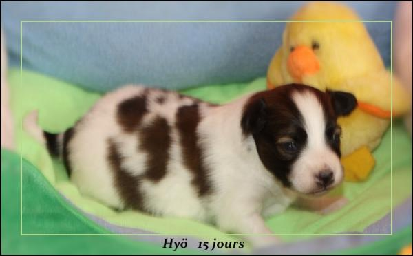 hyo-15-jours-1.jpg