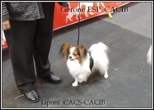 Iapo gerone cacib 20 03 2016 3