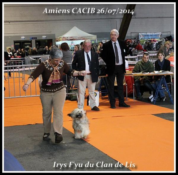 Irys amiens cacib 2014 3