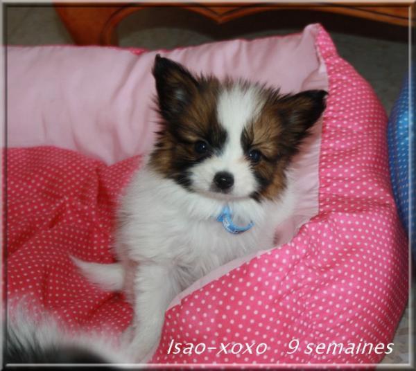 isao-xoxo-9-sems-1.jpg