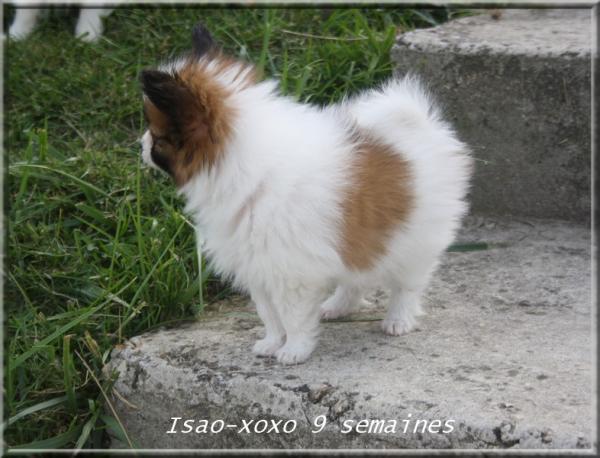 isao-xoxo-9-sems-5.jpg