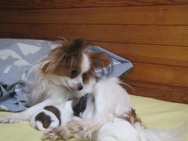 Ixia et ses bebes