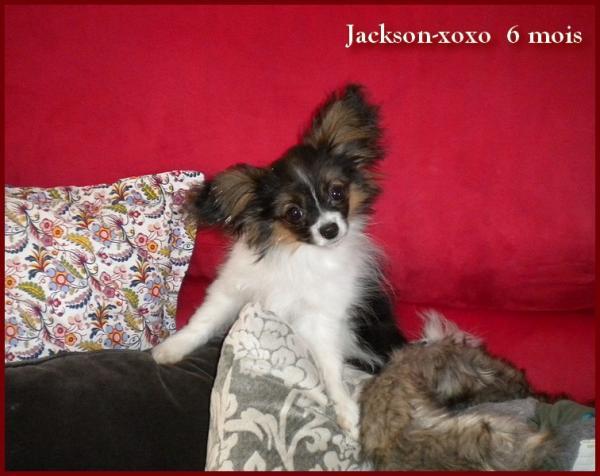 Jackson xoxo 6 mois 3
