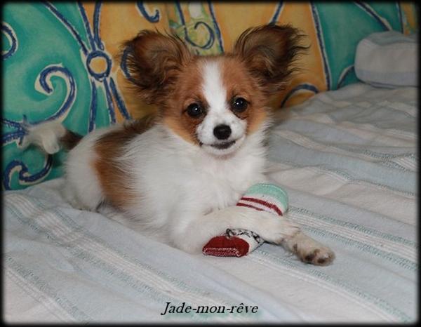 Jade 4 mois 2