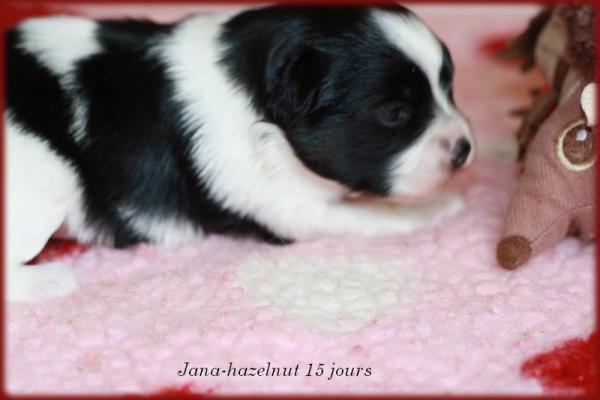 Jana hazelnut 15 jrs 2