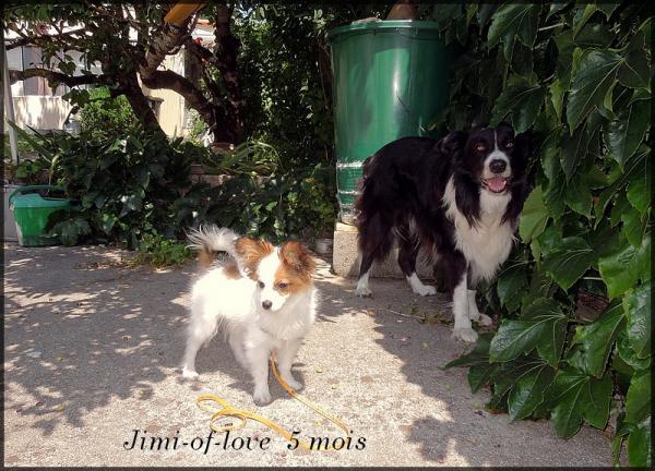 Jimi of love 5 lois 1