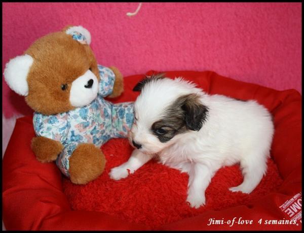 Jimi of love