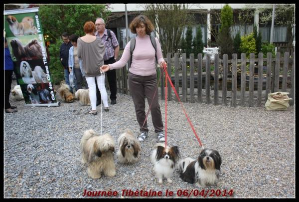 Journ e tib taine 06 04 2014 3