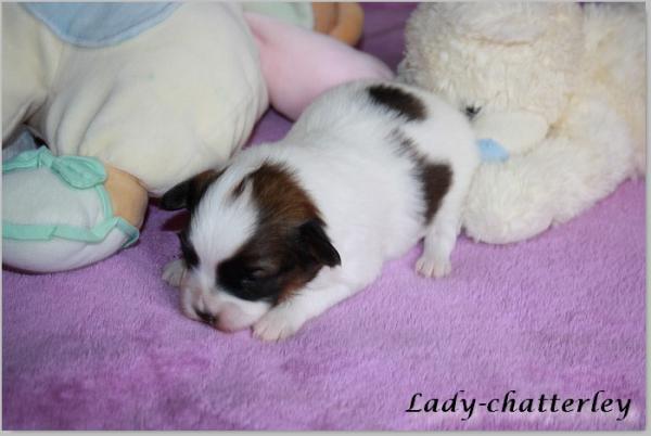 Lady 15 jours 3