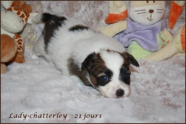 Lady chatterley 21 jours 2