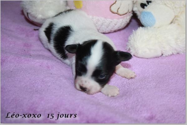 Leo xoxo 15 jours 2