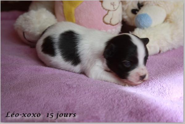Leo xoxo 15 jours 3