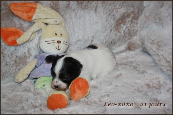 Leo xoxo 21 jours 3