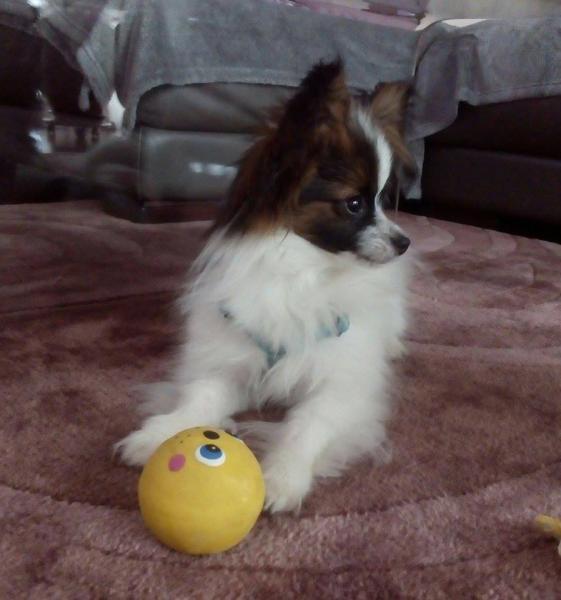 Leo xoxo 6 mois 1