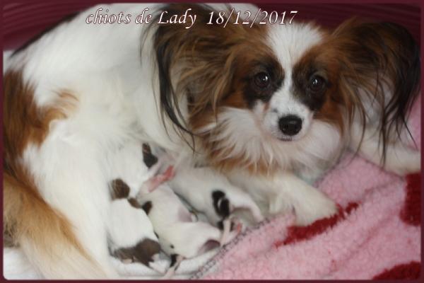 Les chiots de lady 1 jour 1