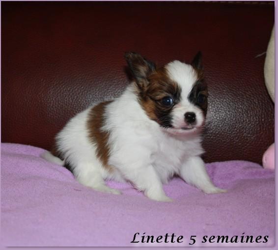 Linette 5 sems 5