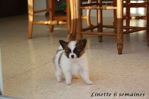 Linette 6 sems 3