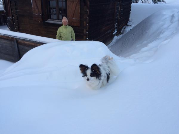 Luky a la neige 03 2016