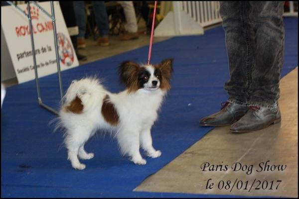 Mai lie paris dog show 1