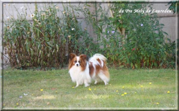 mes-chiens-sept-2012-4.jpg