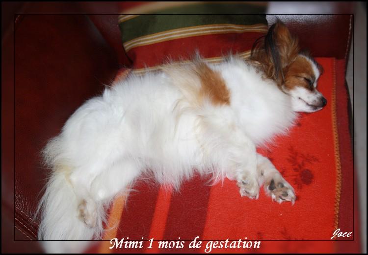mimi-a-1-mois-de-grossesse-008.jpg