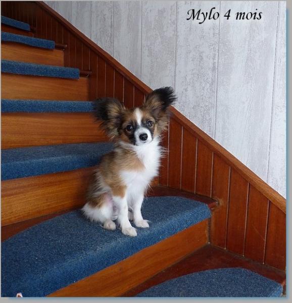 Mylo 4 mois 1