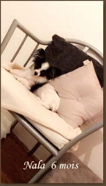 Nala 6 mois 1