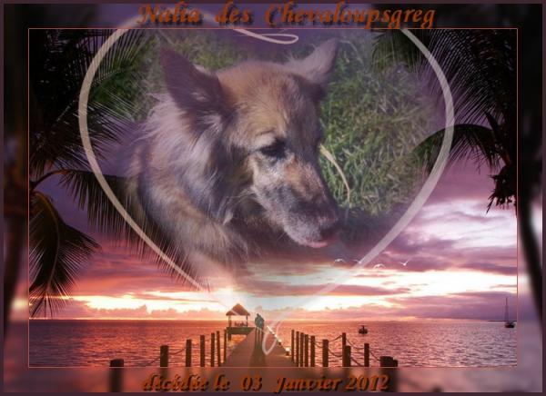 nalia-decede-le-03-01-2012-2.jpg