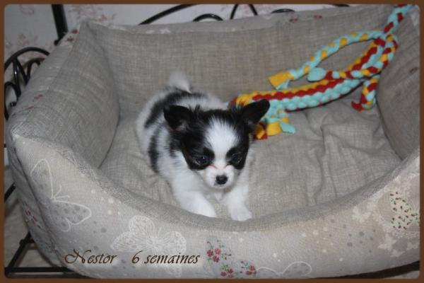 Nestor 6 semaines 2